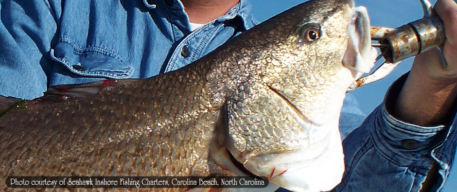 Redfish, Red Drum, Speckled Trout, Flounder, Stripers